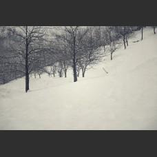 Alberi e neve